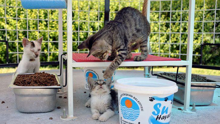 Mersin Büyükşehir Belediyesi'nden Kedi Sığınma Evleri