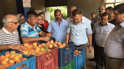 CHP'li Aytuğ Atıcı Toroslar'da Şeftali Üreticilerini Ziyaret Etti