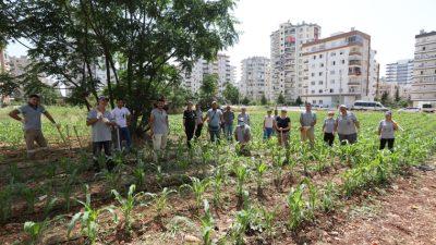 Mezitli Üretici Kadın Kooperatifi'nin Mısırları Büyüyor
