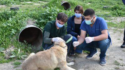Şiddet Gören Sokak Köpeği Tedavi Ediliyor