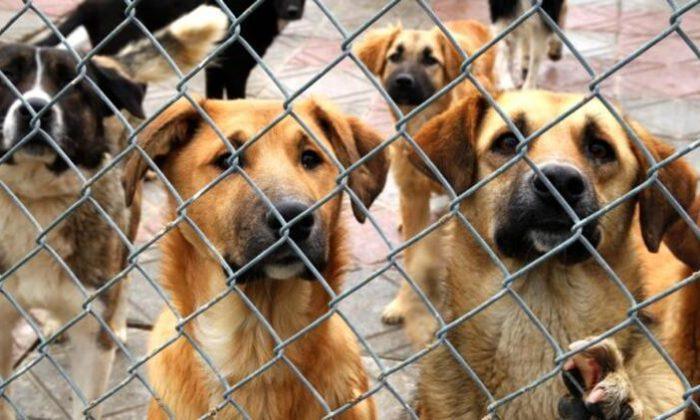 Hayvan Barınağındaki Vahşetle İlgili Belediyeden Açıklama!