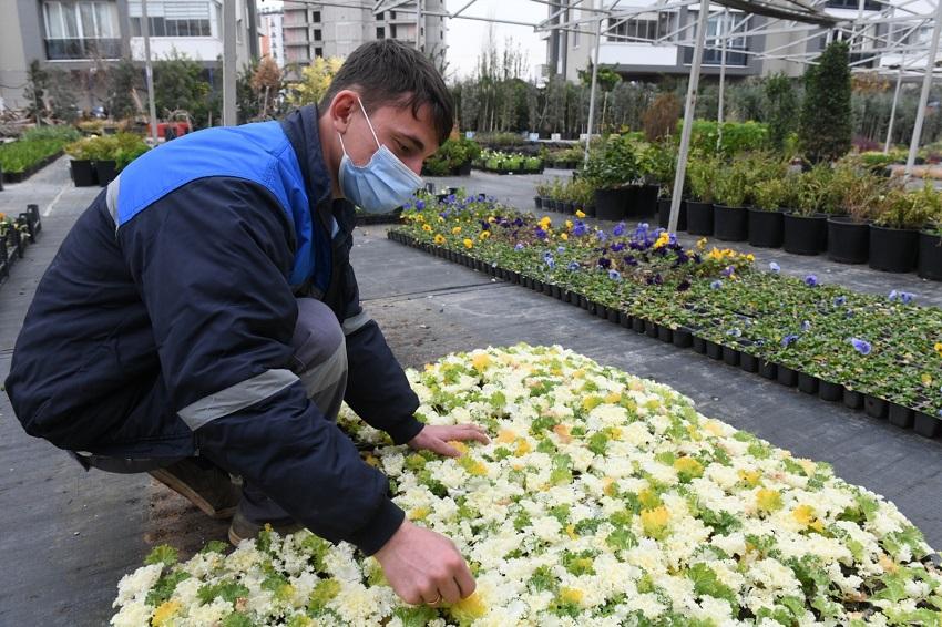 Yenişehir Belediyesi Fidanlığı Üretiyor Kent Yeşilleniyor
